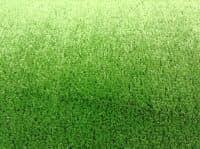 Искусственная трава Garden Grass