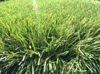 Искусственная трава 60мм.